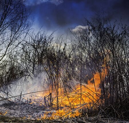 Wildfire burning the dry vegetation in the field with the flames and smoke rising to the sky.