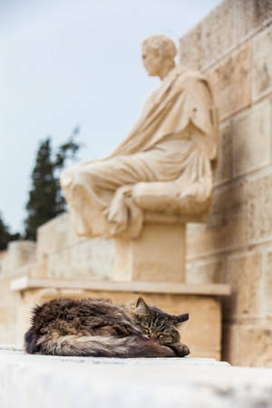 Photo pour Cat sleeping next to the statue of the dramatist Menander at the Theatre of Dionysus Eleuthereus the major theatre in Athens and considered the first theatre of the world which is built at the foot of the Athenian Acropolis dated to the 6th century BC - image libre de droit