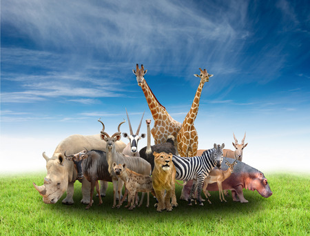 group of africa animals  with green grass and blue sky