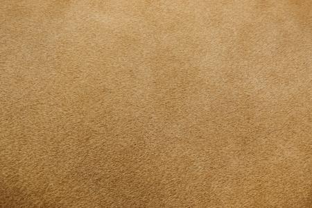 Photo pour close up of real lion fur texture - image libre de droit