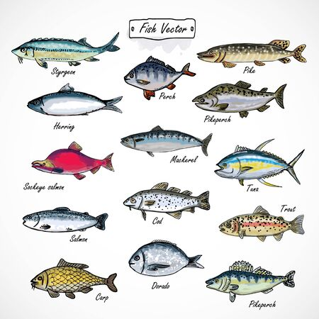 Illustration pour Set fish seafood watercolor hand drawn isolated on white background - image libre de droit