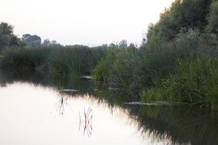 Beautiful evening nature, river, grass and reflection of grass in the river
