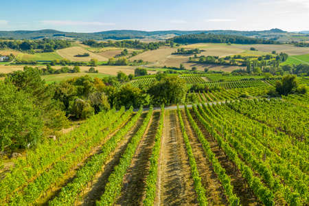 Aerial view of a green summer vineyard
