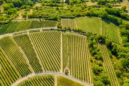 Aerial view of a green summer vineyard