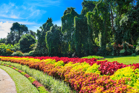 Multicolored alley of flowers and trees in the Royal Botanic Gardens, Kandy. Sri Lanka