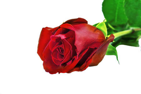 Photo for Bouquet of three red roses isolate on a white background. Roses bouquet isolated on white background. - Royalty Free Image