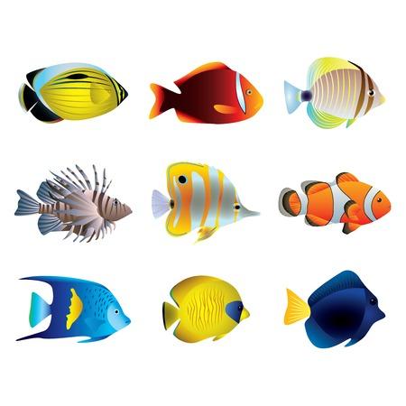 Illustration pour Popular tropical fishes on white vector set - image libre de droit