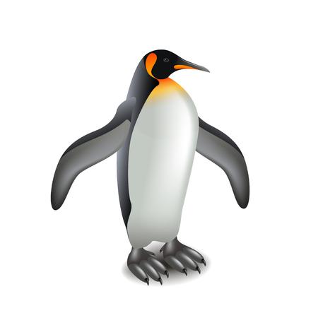 Penguin isolated on white photo-realistic  illustration