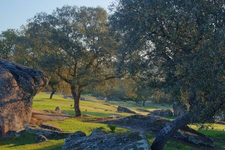 pasture caught at dawn where trees and rocks bathed in sunlight are seen
