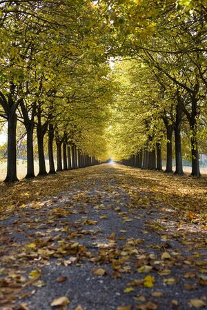Road running through an autumnal tree alley.