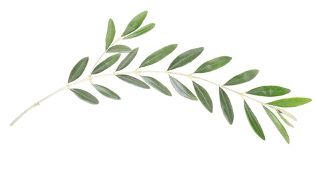 Olive branch and leaves on white