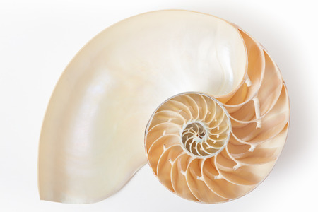 Nautilus shell section, perfect Fibonacci pattern on white with soft shadow, clipping path