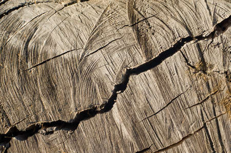 Old tree stump background,weathered wood texture with the cross section of a cut log