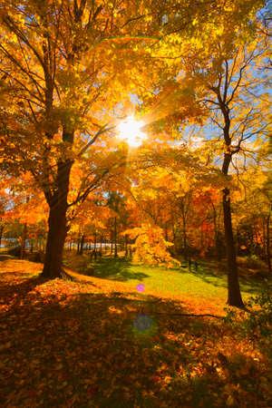 Foto de Colorful fall scenery landscapes. - Imagen libre de derechos