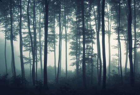 Foggy Forest Light