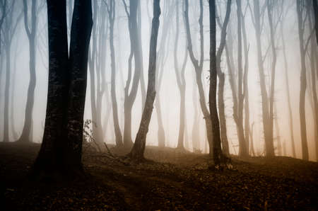 Fantasy forest with fog