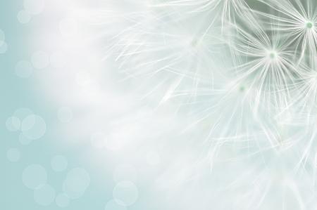 Foto de Dreamy dandelion macro - Imagen libre de derechos