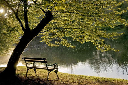 Bench under the tree by the riverside.