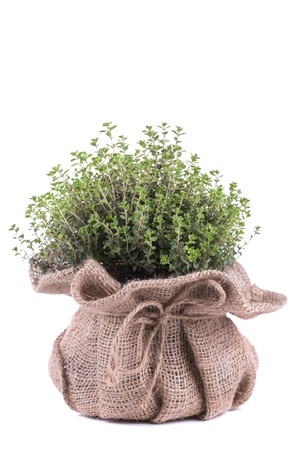 Fresh herbs in bag  on white background