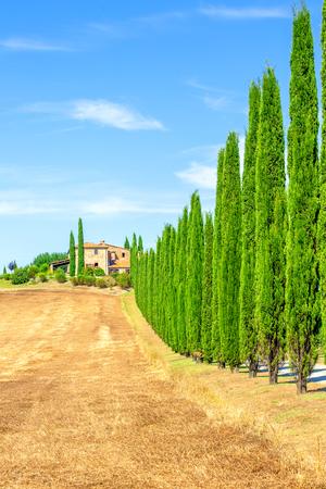 Photo pour Italian cypress trees rows and a road rural landscape - image libre de droit