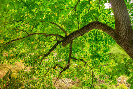 Photo pour Bright green leaves on the tree. Tree branch - image libre de droit