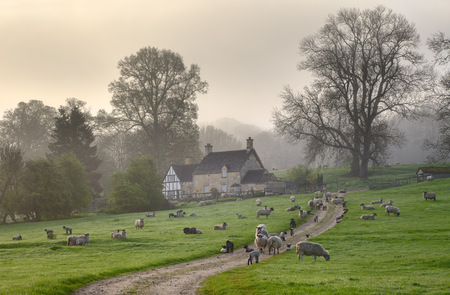 A misty Cotswold spring morning, Saintbury near Chipping Campden, Gloucestershire, England