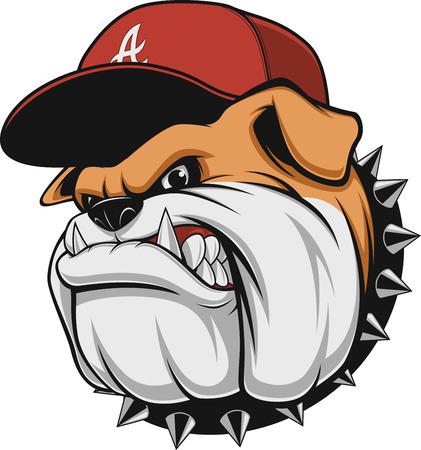 Illustration pour Vector illustration, a fierce bulldog wearing a cap baseball cap, against a white background - image libre de droit