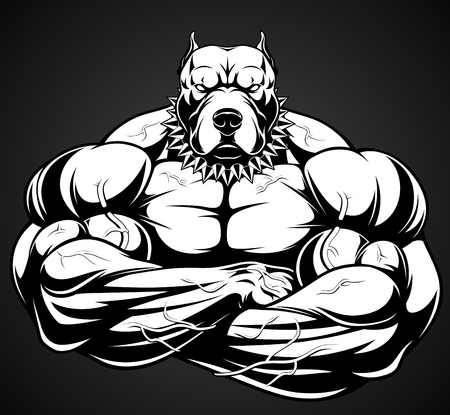 Vector illustration of a strong  pitbull with big biceps, bodybuilder