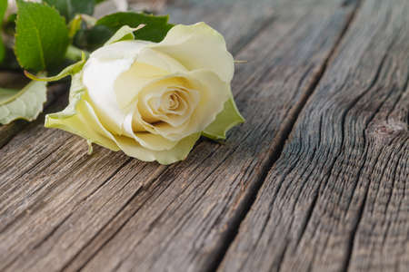 Foto de White rose on wood rustic background - Imagen libre de derechos