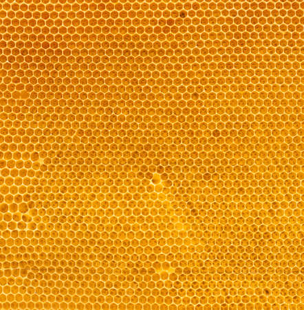 fresh honey in comb texture