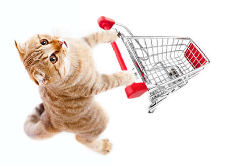 Foto de cat with shopping cart top view isolated on white - Imagen libre de derechos