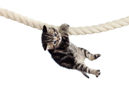 funny baby cat hanging on rope