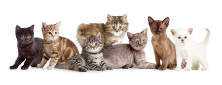Photo pour A group of different kitten - image libre de droit