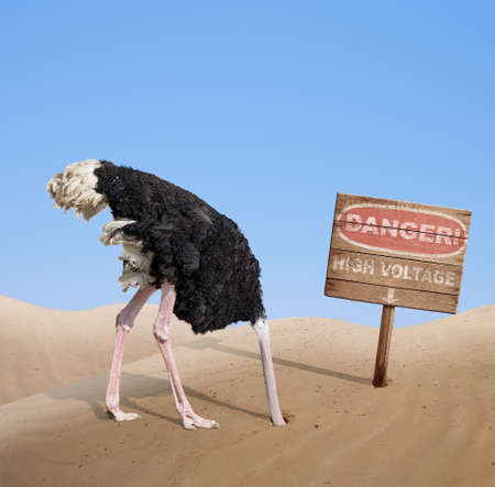 Photo for scared ostrich burying head in sand under danger sign - Royalty Free Image