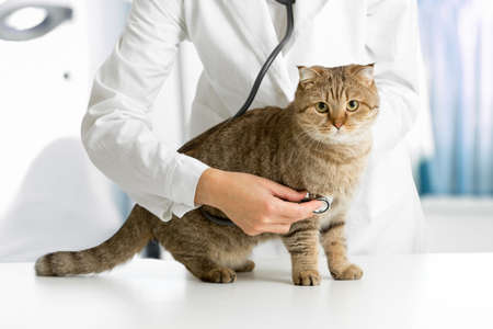 Photo pour Cat in veterinarian clinic - image libre de droit