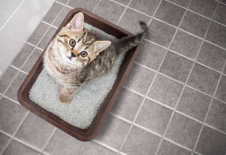Photo for Cute cat top view sitting in litter box with sand on bathroom floor - Royalty Free Image