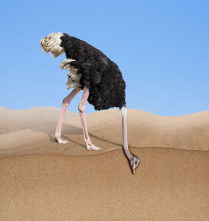 Photo pour ostrich with head burying in sand - image libre de droit