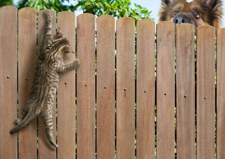 Photo for Funny kitten hanging on fence and big dog behind - Royalty Free Image