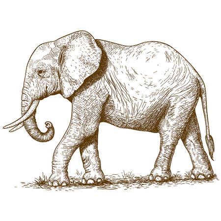 Ilustración de vector illustration of engraving elephant on white background - Imagen libre de derechos