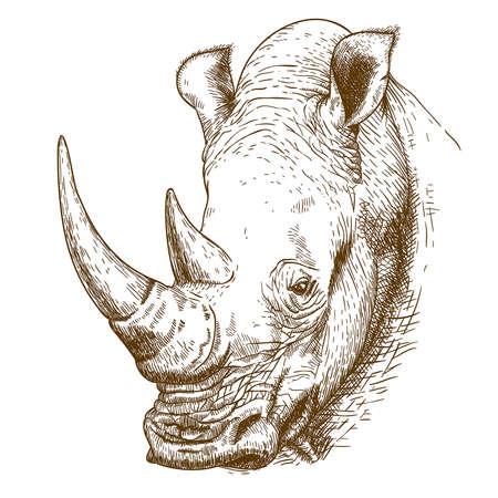 Ilustración de Vector engraving antique illustration of rhinoceros head isolated on white background - Imagen libre de derechos