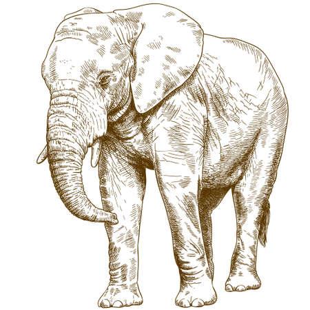 Ilustración de Antique engraving drawing vector illustration of big elephant isolated on white background. - Imagen libre de derechos