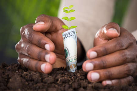 Photo pour Close-up Of Person's Hand Protecting Plant Rolled With Banknote - image libre de droit