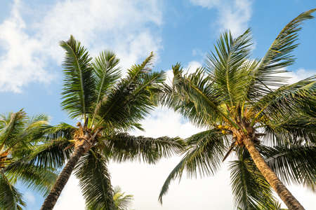 Photo for Low Angle View Of Palm Trees On Anse Intendance Beach, Mahe Island, Seychelles - Royalty Free Image