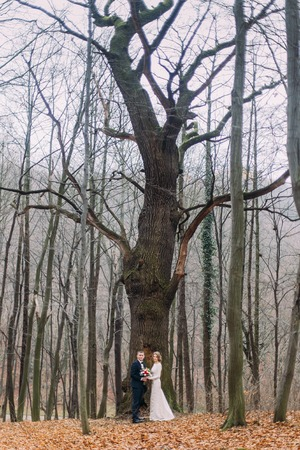 Beautiful young wedding couple posing near the big leafless tree in autumn forest