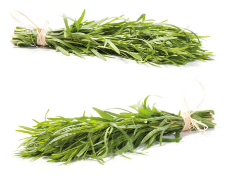 Fresh tarragon herb bunch isolated on white background