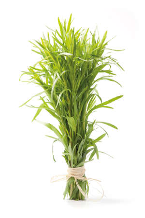 Fresh tarragon herb bunch isolated on white background.