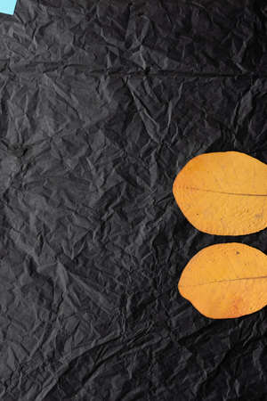 Two yellow leaf leaves on a black background. Picture of leaves.