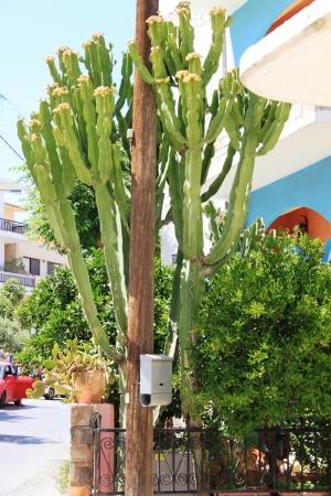 Cactus mast