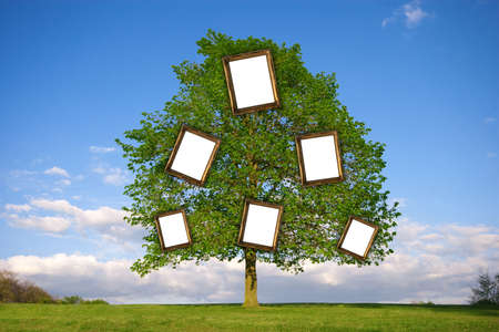 Lonely tree with empty picture frames re: Family Tree