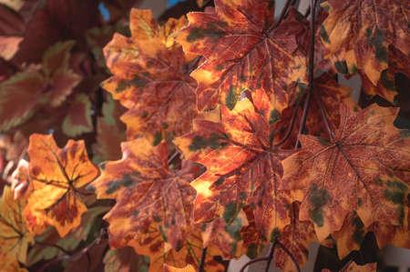 Photo pour Artificial maple leaves as autumn background. - image libre de droit